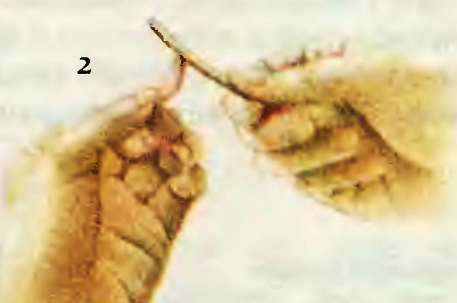 2. Подготовка ногтей