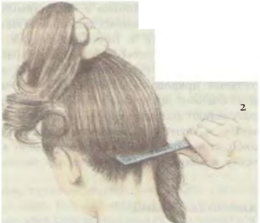 2. Зачешите волосы с затылка