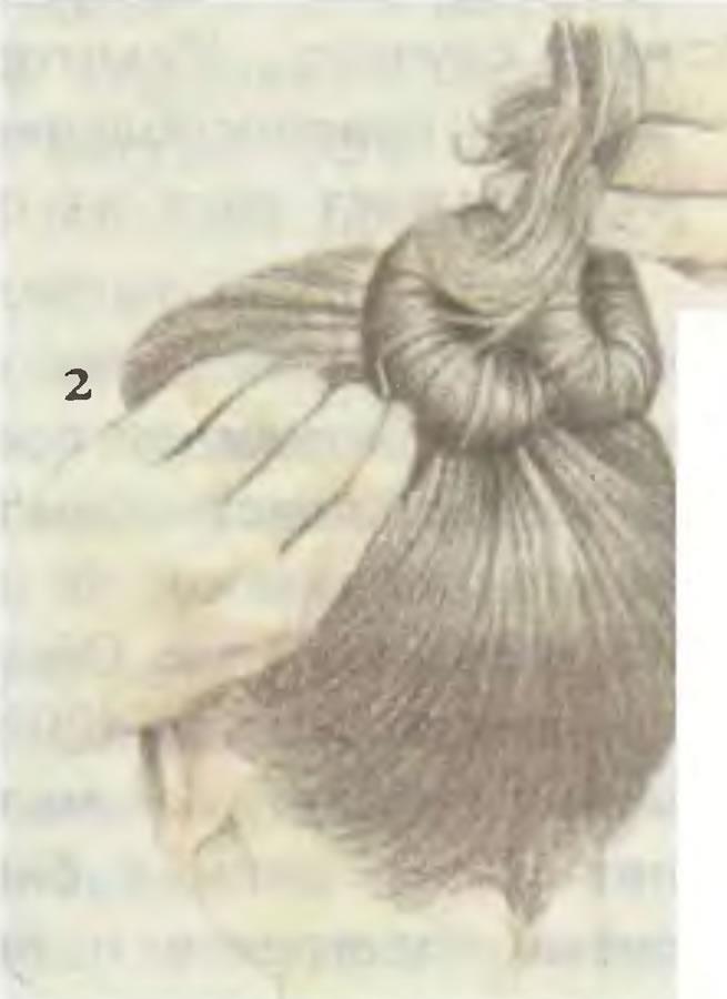 2. Закрутить и уложить жгут