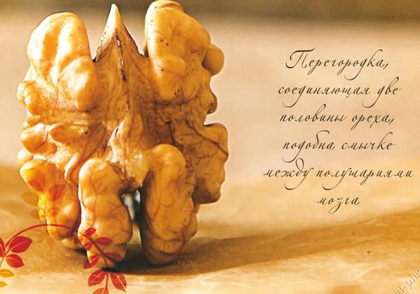 Грецкий орех напоминает человеческий мозг