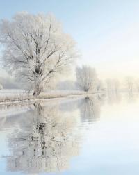 Иней на дереве зимой