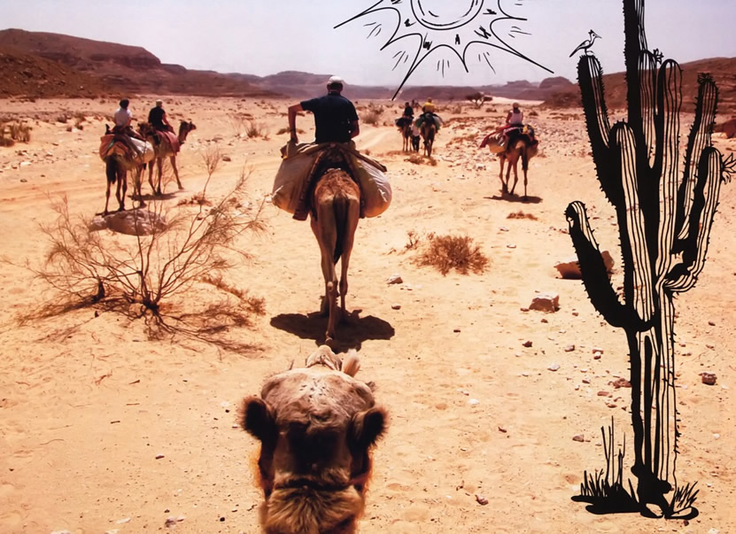 Наша группа на верблюдах