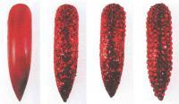 Ногти, украшенные рубинами