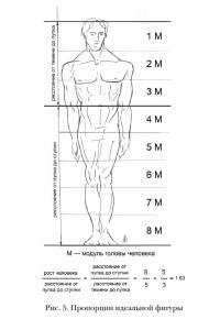 Пропорции идеальной фигуры