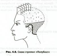 Техника выполнения стрижек: стрижка «Полубокс»