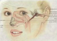 Строение лица