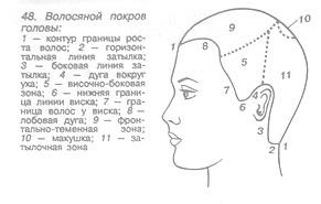 Волосяной покров головы