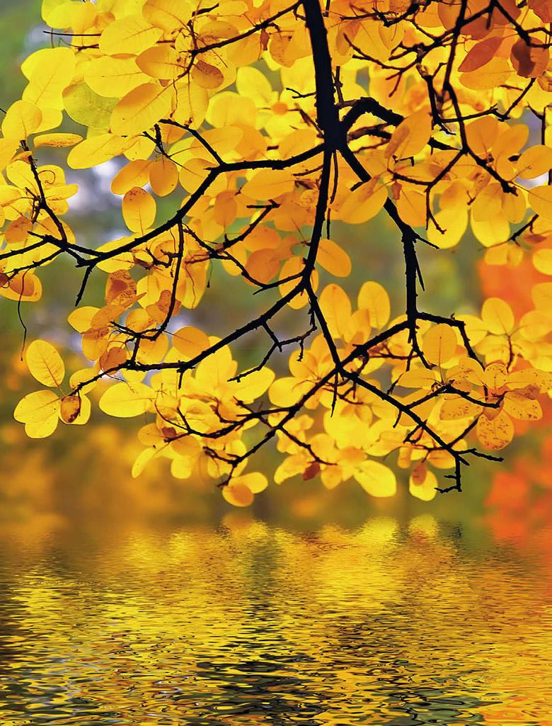 Желтые листья осеннего дерева